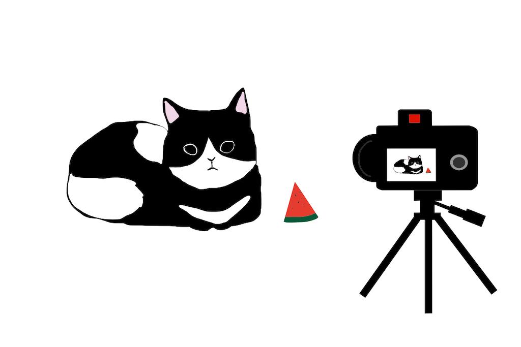 滋賀県内Youtube動画撮影の猫